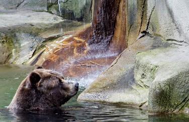 3 Cleveland Zoo 805 x 453