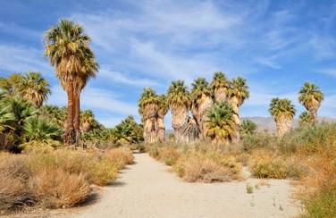 2 58626_Coachella Valley Preserve GettyImages-130842179