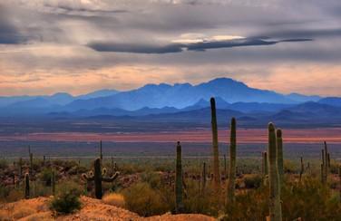 4 58571_Sonoran Desert Landscape 1640 x 923