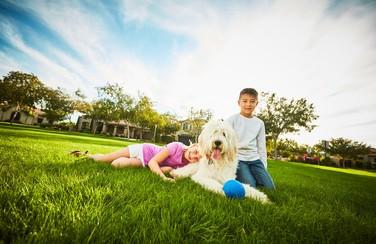 12 14024_Four Seasons Victory at Verrado_Verrado Kids with Dog 501 x 624